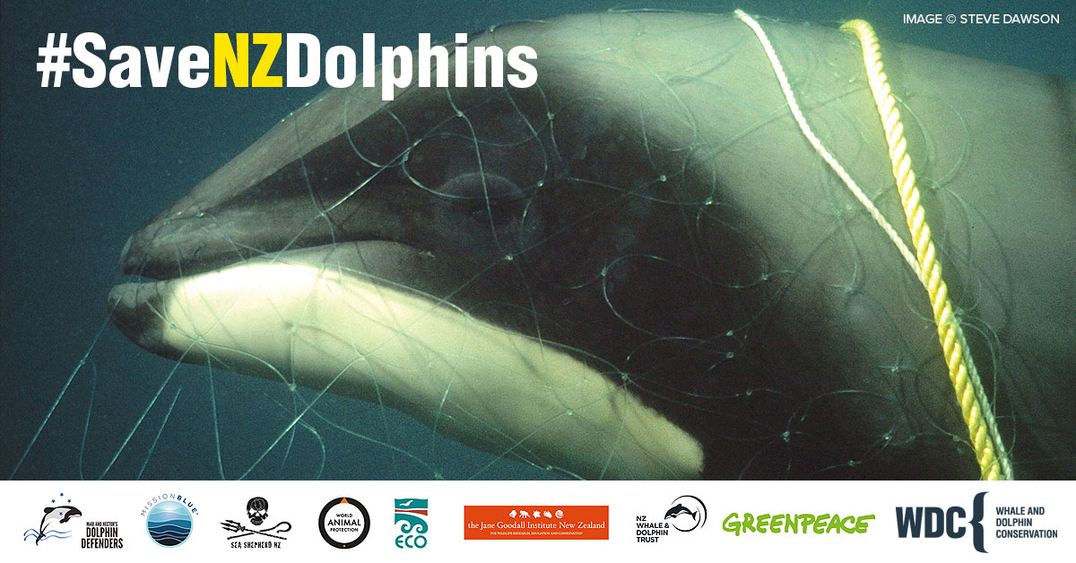 New Zealand dolphins are on the verge of extinction - join our campaign