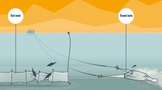 trawls and set nets original artwork RICHARDPALMERGRAPHICS.COM edited for republication
