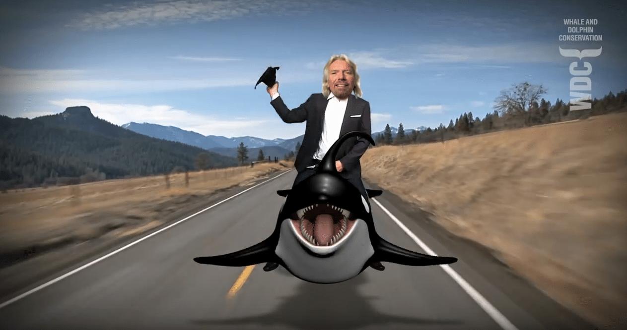 Branson orca