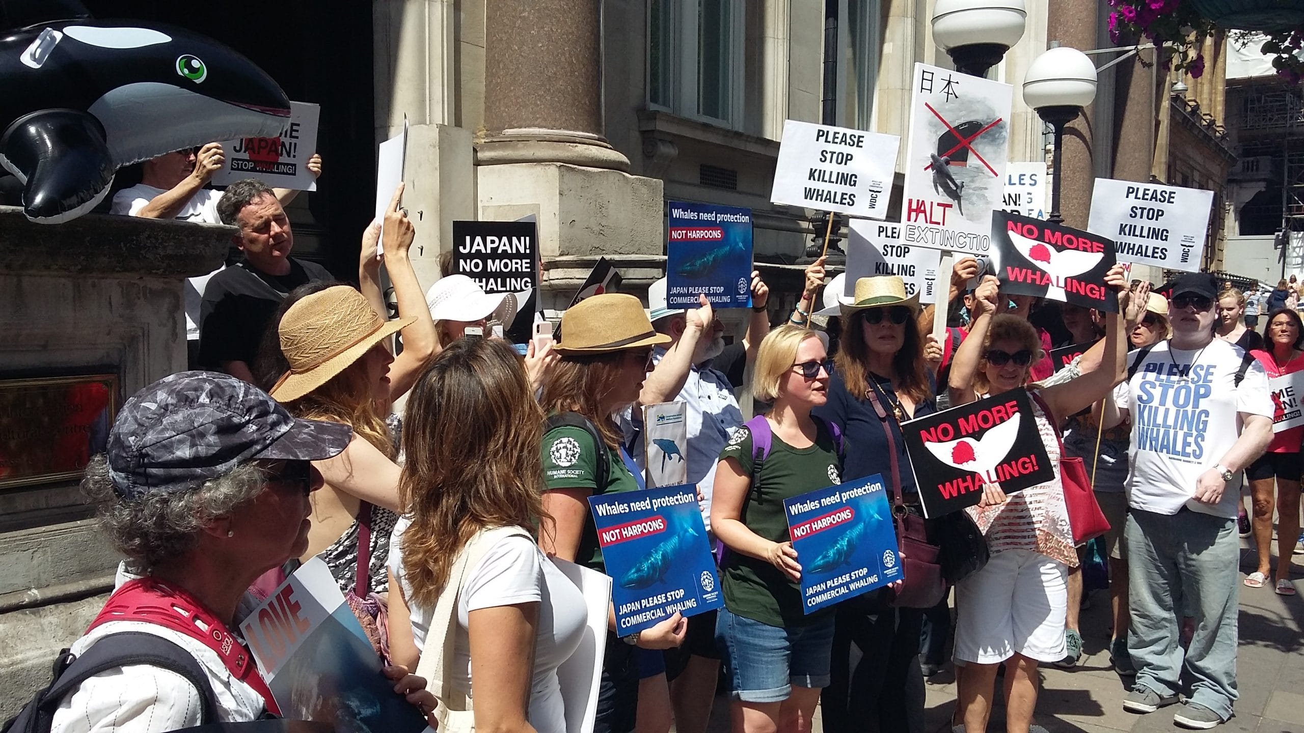 stop whaling march group WDC