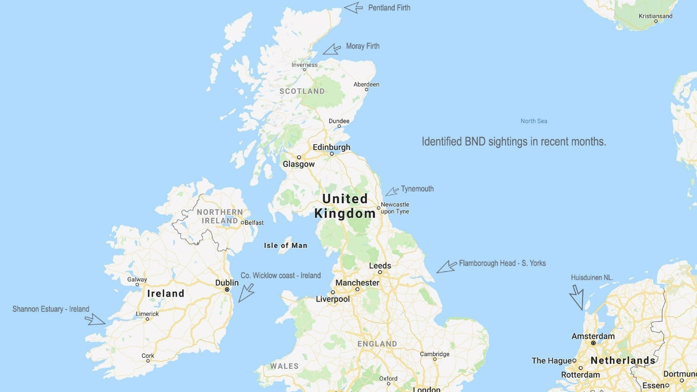 Map Of Uk East Coast.Globe Trotting Dolphins What S Going On Whale Dolphin
