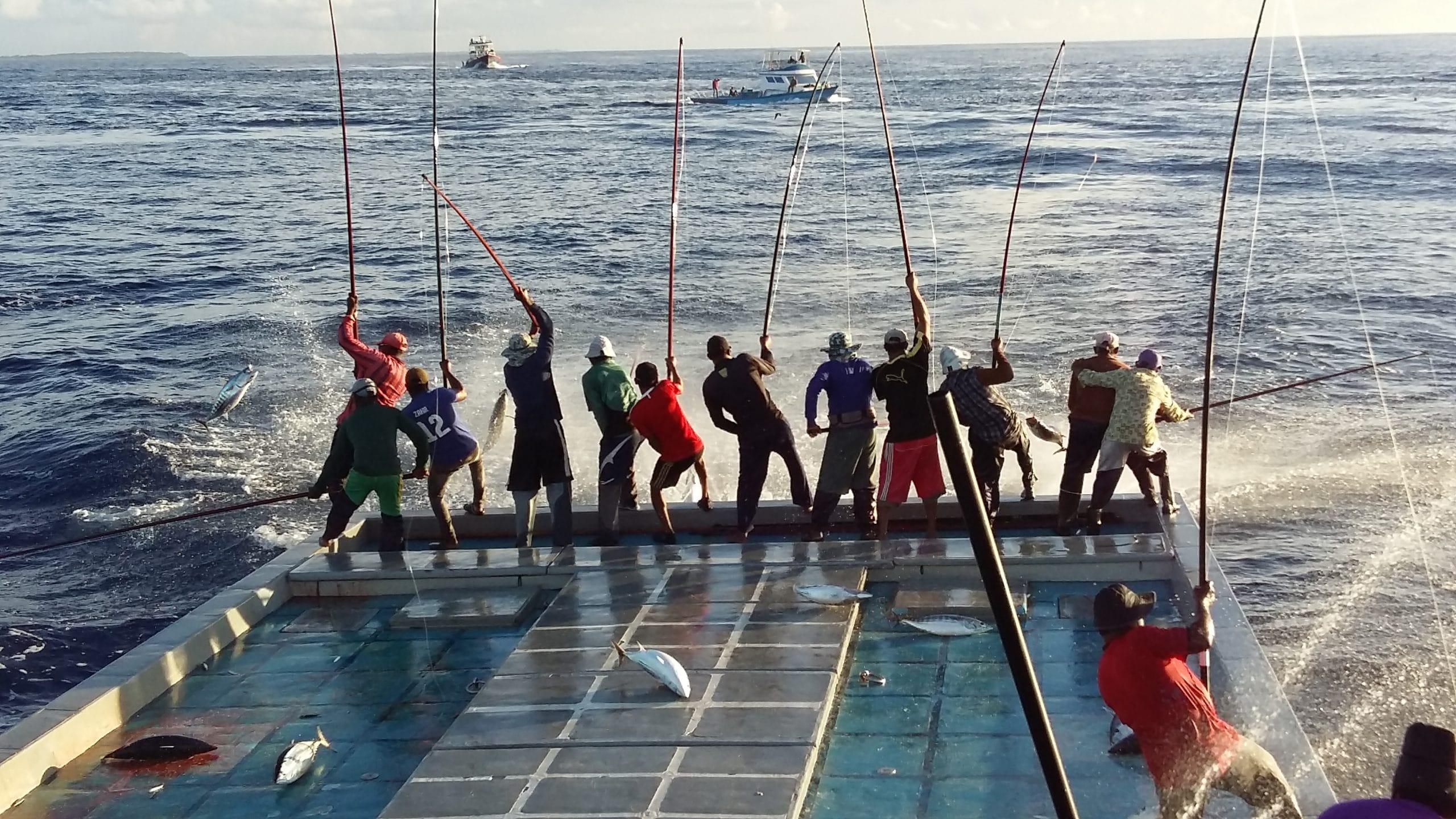 Pole-and-line fishing, Maldives, 2016 - ® IPNLF