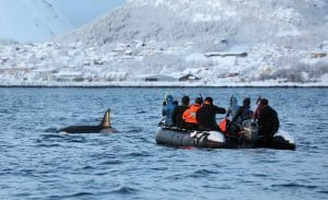 Frozen waste – missed opportunity to address deep concerns over Norway's 'snorkel-with-orcas' tours