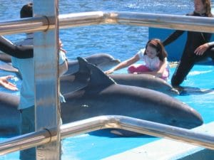 Captivity is cruel for dolphins