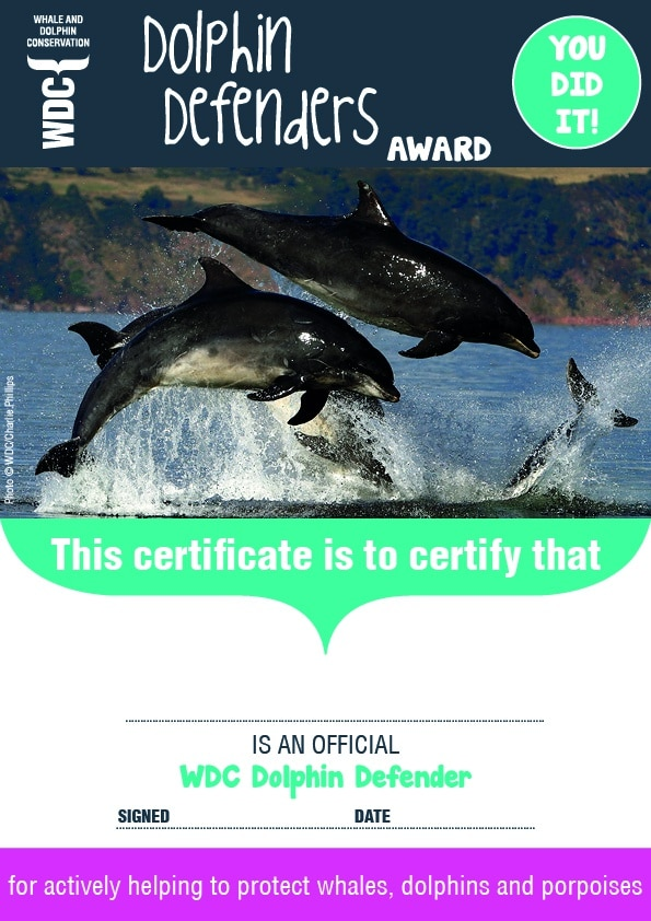 Every Dolphin Defender gets a certificate and badge