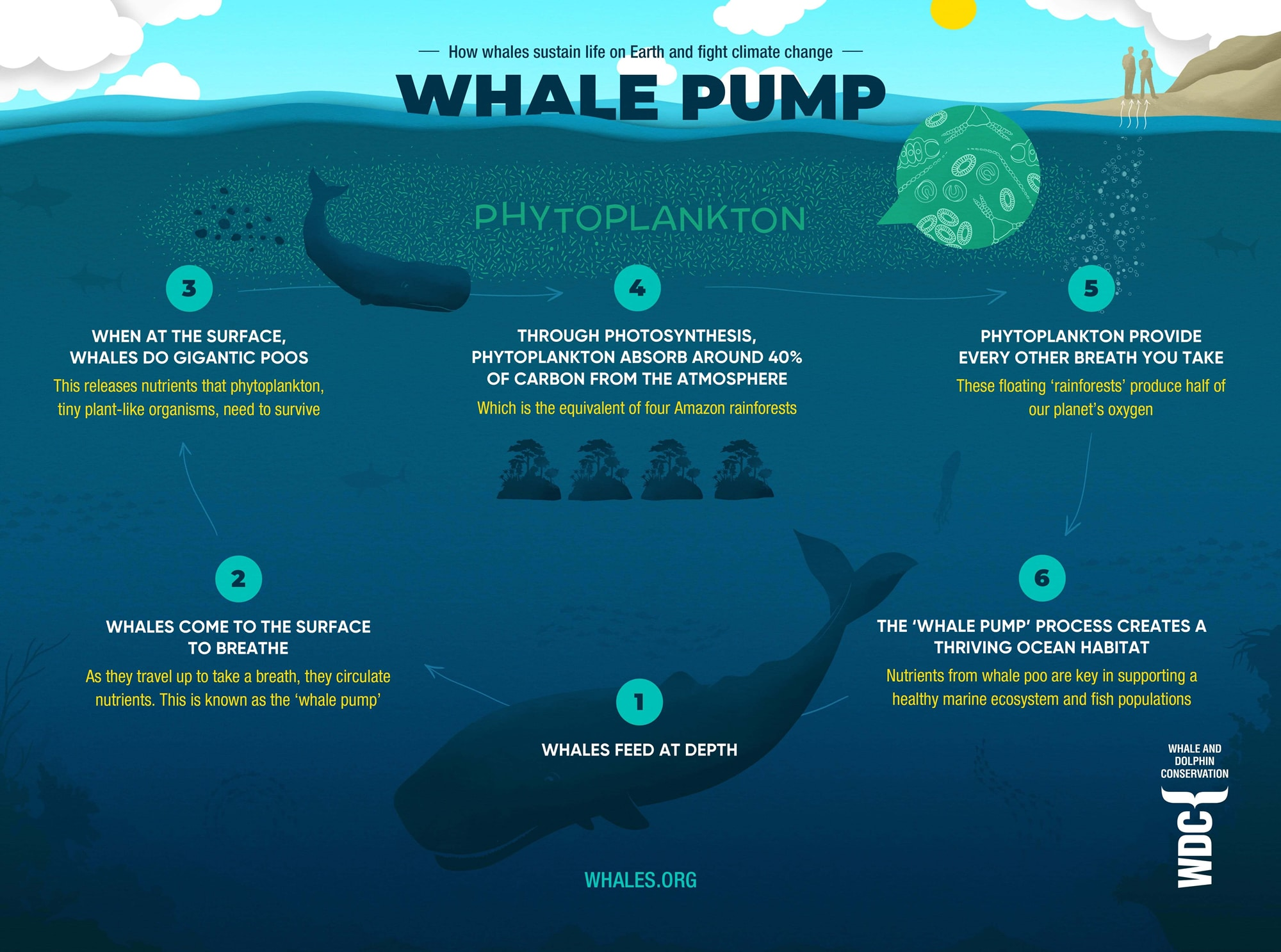 Whale Pump - How whales sustain life on Earth and help fight climate change.