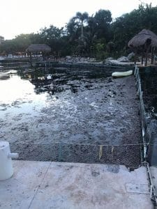 Concerns over water pollution at captive dolphin facility
