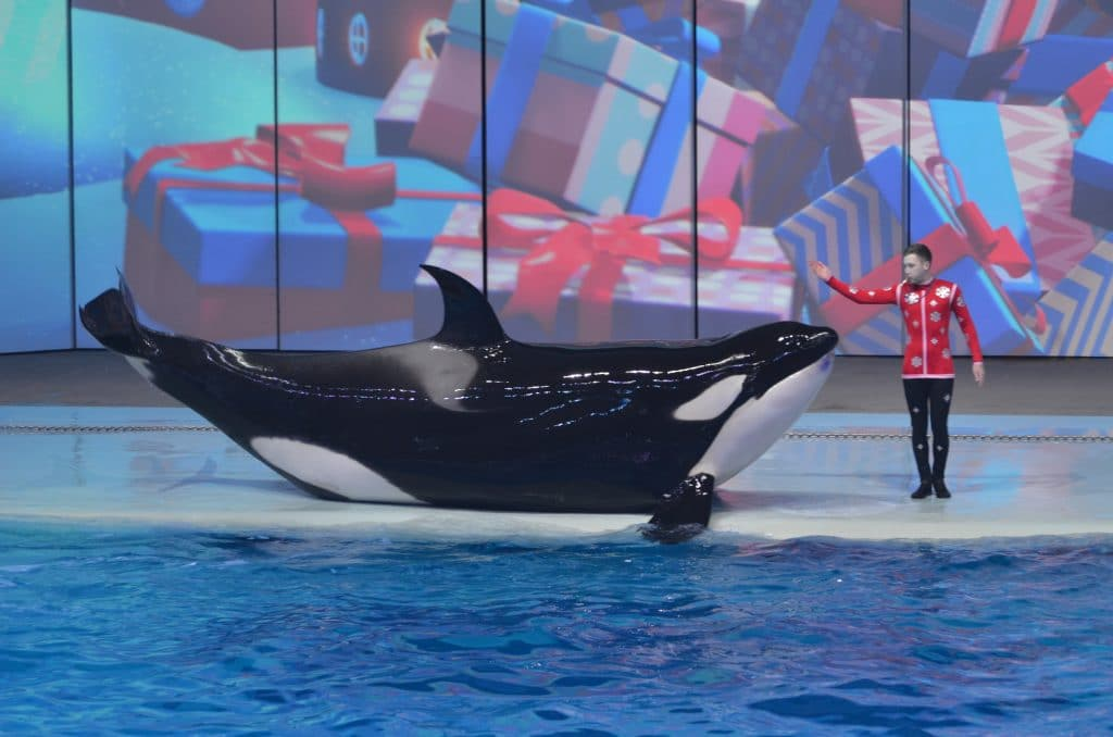 Will we ever see an end to whale and dolphin captures in Russia?