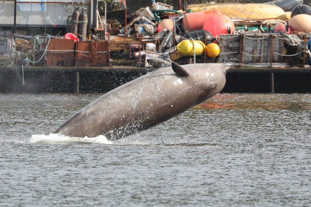 Rescuers try to persuade whales to leave loch ahead of military exercise