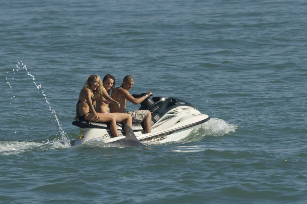 "Solitary ""friendly"" dolphin Dave with jet ski. Folkestone Kent, UK"