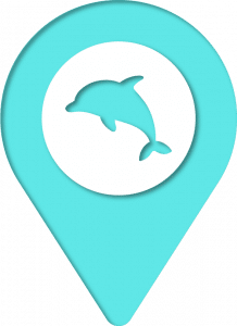 Discover dolphins pin