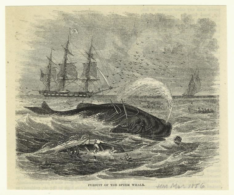 Pursuit of the sperm whale illustration - Digital Public Library of America