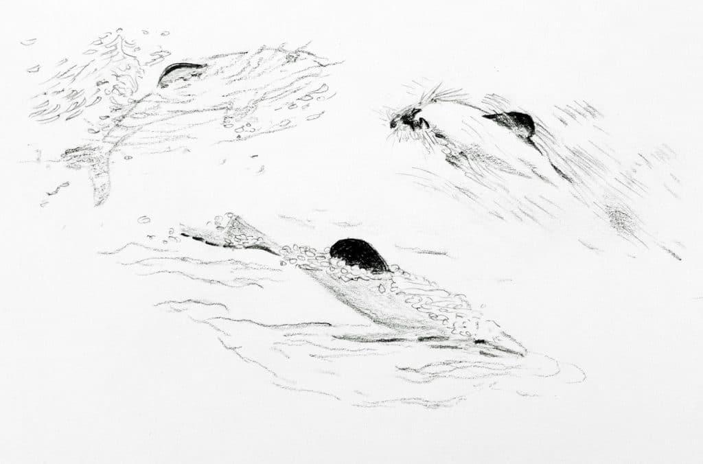 Hector's illustration Nicolette Scourse 1