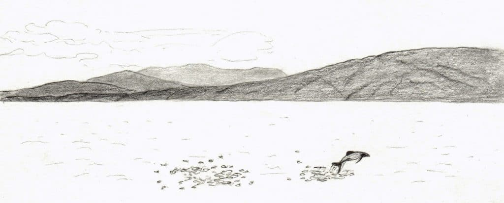 Hector's illustration Nicolette Scourse 2