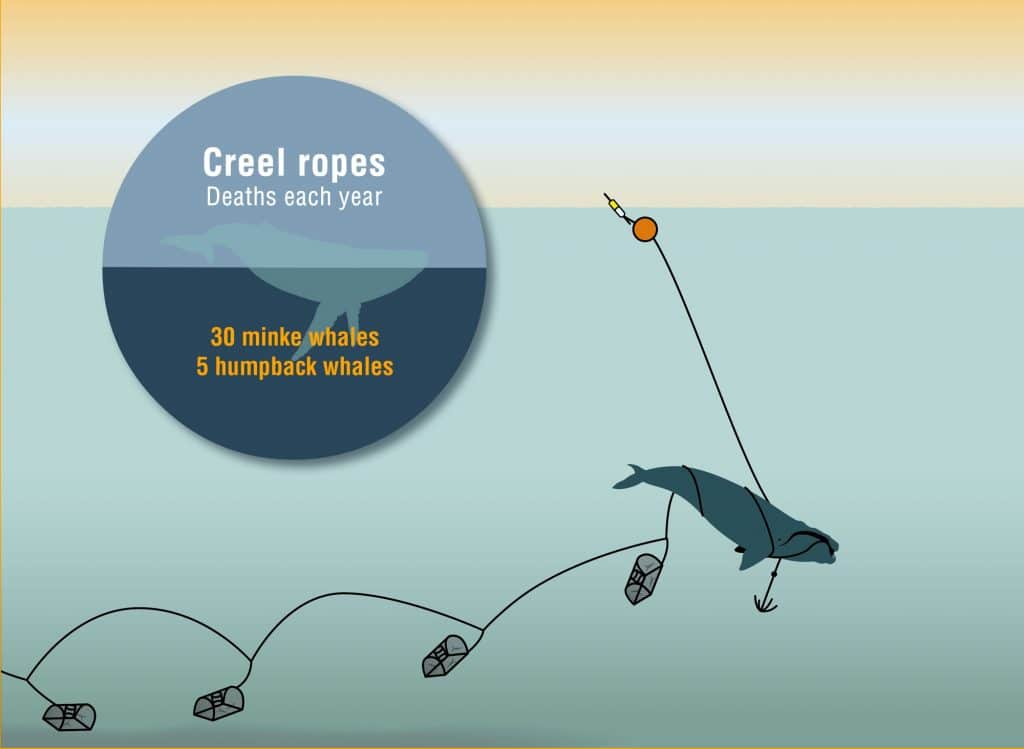 Creel rope