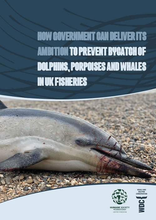 Goodbye bycatch parliamentary briefing
