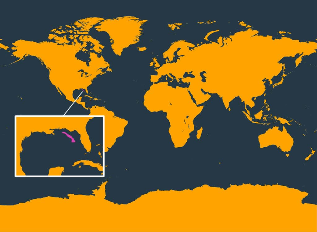 Rice's whale distribution map