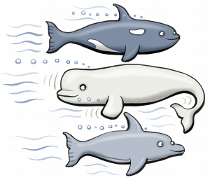 beluga backwards s