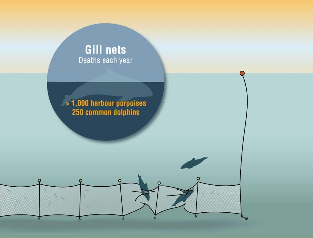 gill-nets2-1024x778