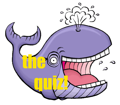 the quiz whale
