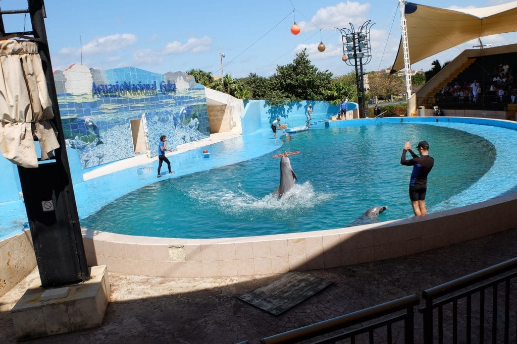 Bottlenose dolphins perform in a show at the National Aquarium, Cuba