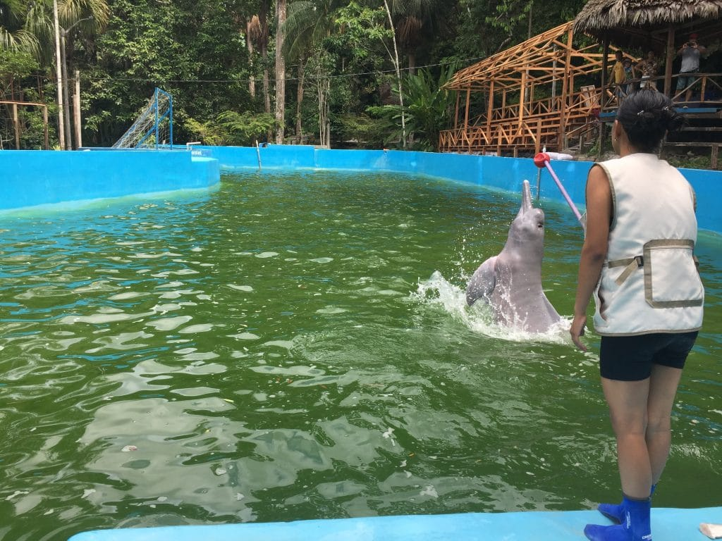 Huayrurín, the world's only captive Amazon River dolphin, at the Quistococha Zoo in Peru