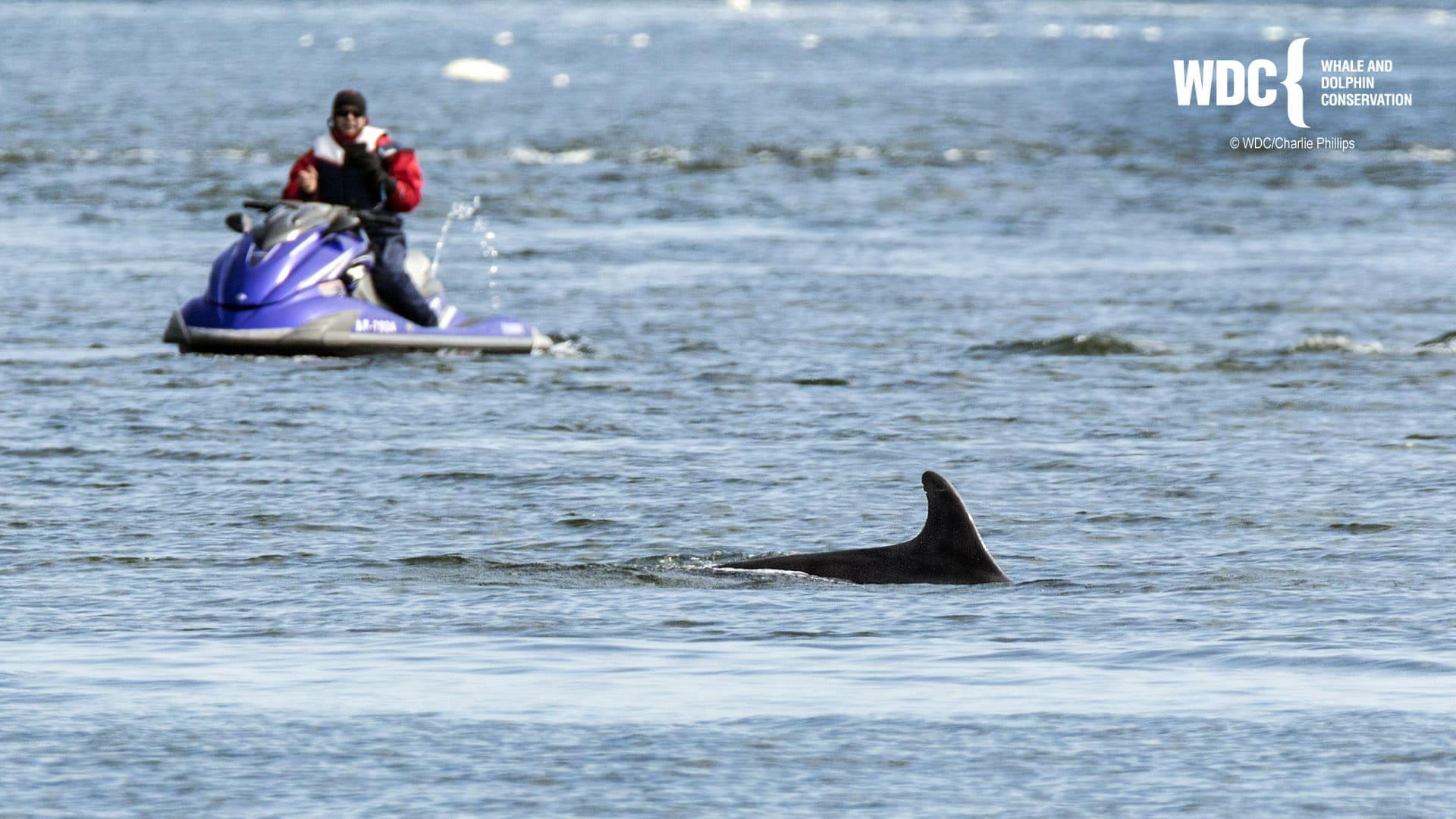 Dolphin disturbance