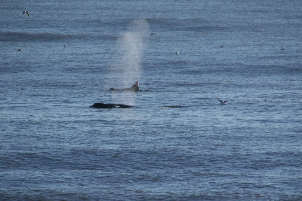 Surfer did the right thing when surprised by a humpback whale