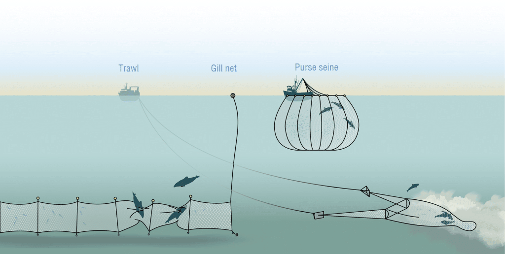 Different types of nets that trap dolphins