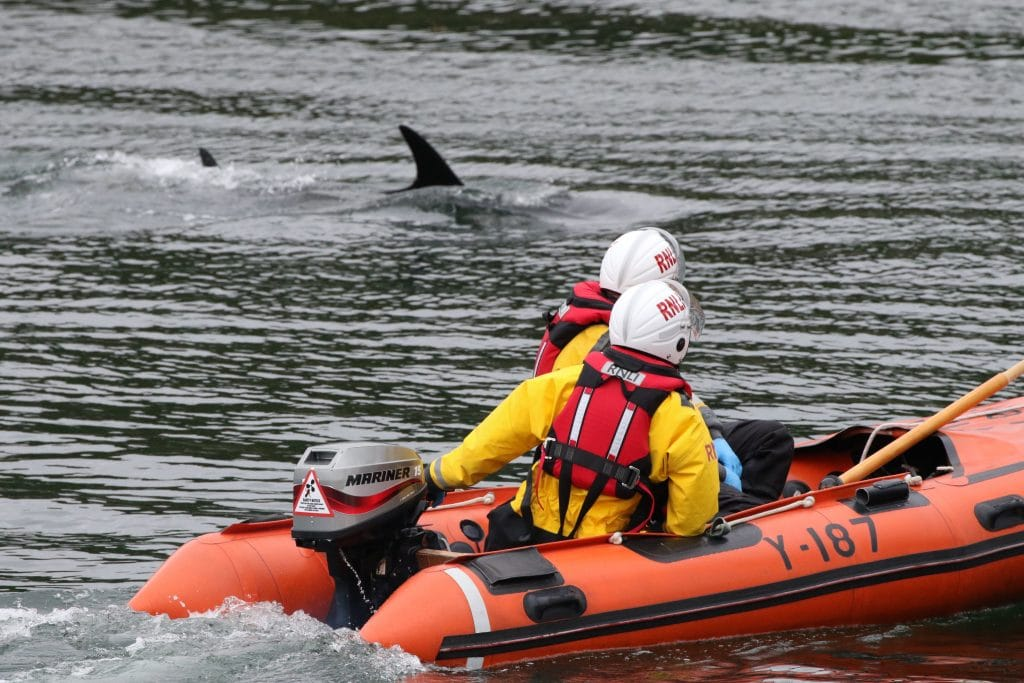 Volunteers expertly guided the dolphins to the harbour entrance