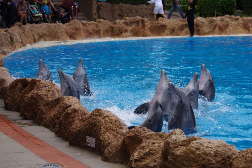 Bottlenose dolphins in never-ending lockdown at Loro Parque, Tenerife
