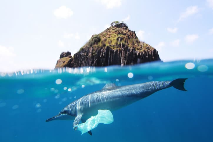 Dolphin with plastic