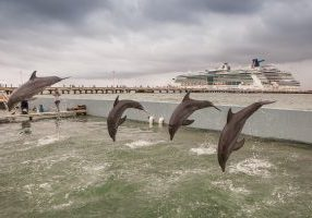 Captive dolphins perform for cruise passengers at the Costa Maya Resort, Mexico