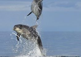 Double Trouble Dolphins 25.07.15 - Charlie Phillips