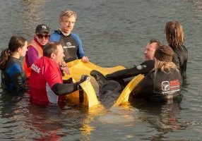 Rescuing a stranded orca calf