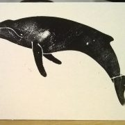 Squirrell Humpback Whale