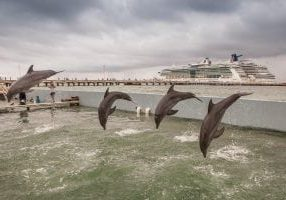 cruise_ship_and_dolphins