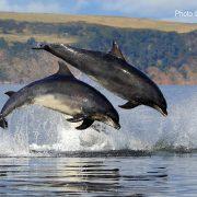 splashy_dolphins